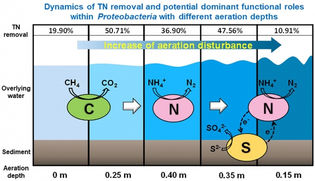 Dynamics of nitrogen transformation and bacterial community with different aeration depths in malodorous river