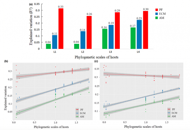 Effects of host phylogeny, habitat and spatial proximity on host specificity and diversity of pathogenic and mycorrhizal fungi in a subtropical forest